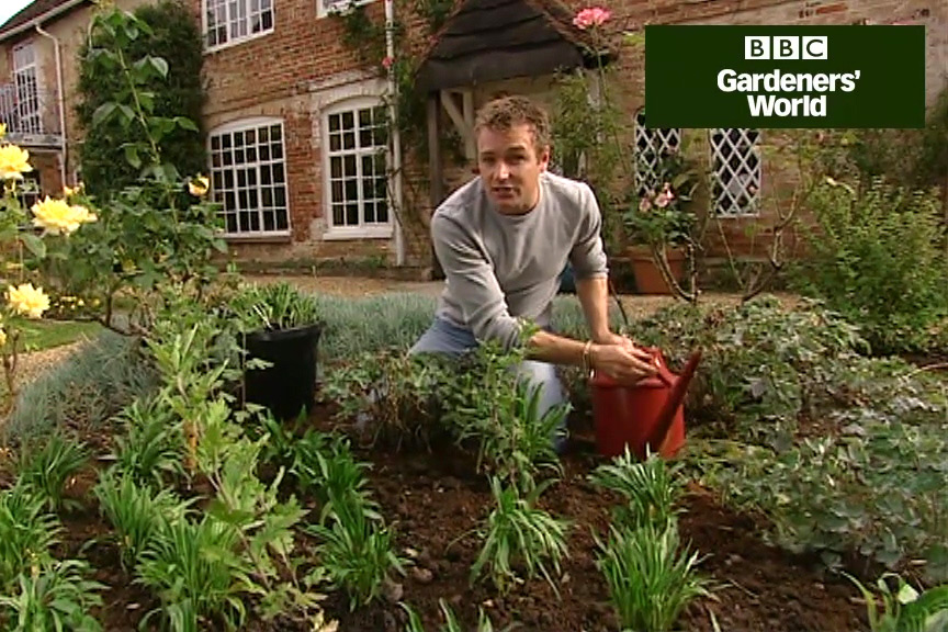How to grow wallflowers video
