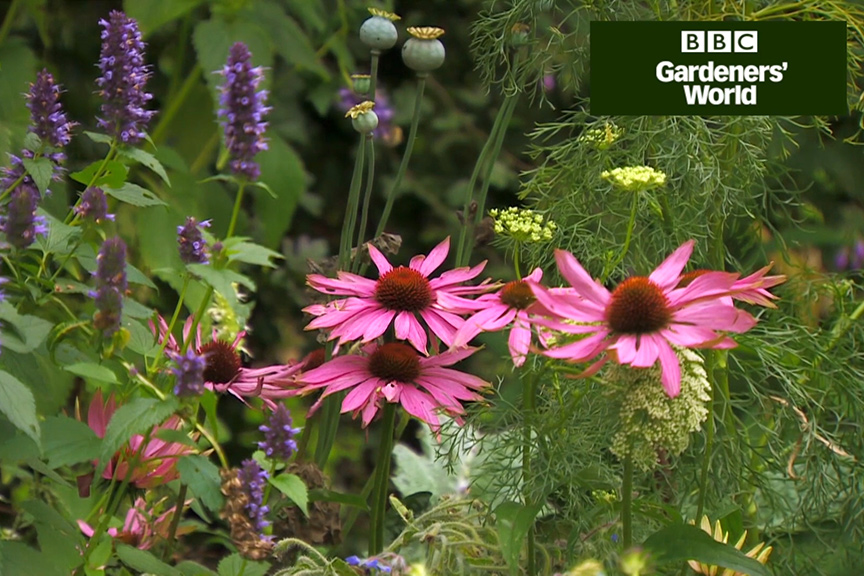 How to create a wildlife garden part eight video
