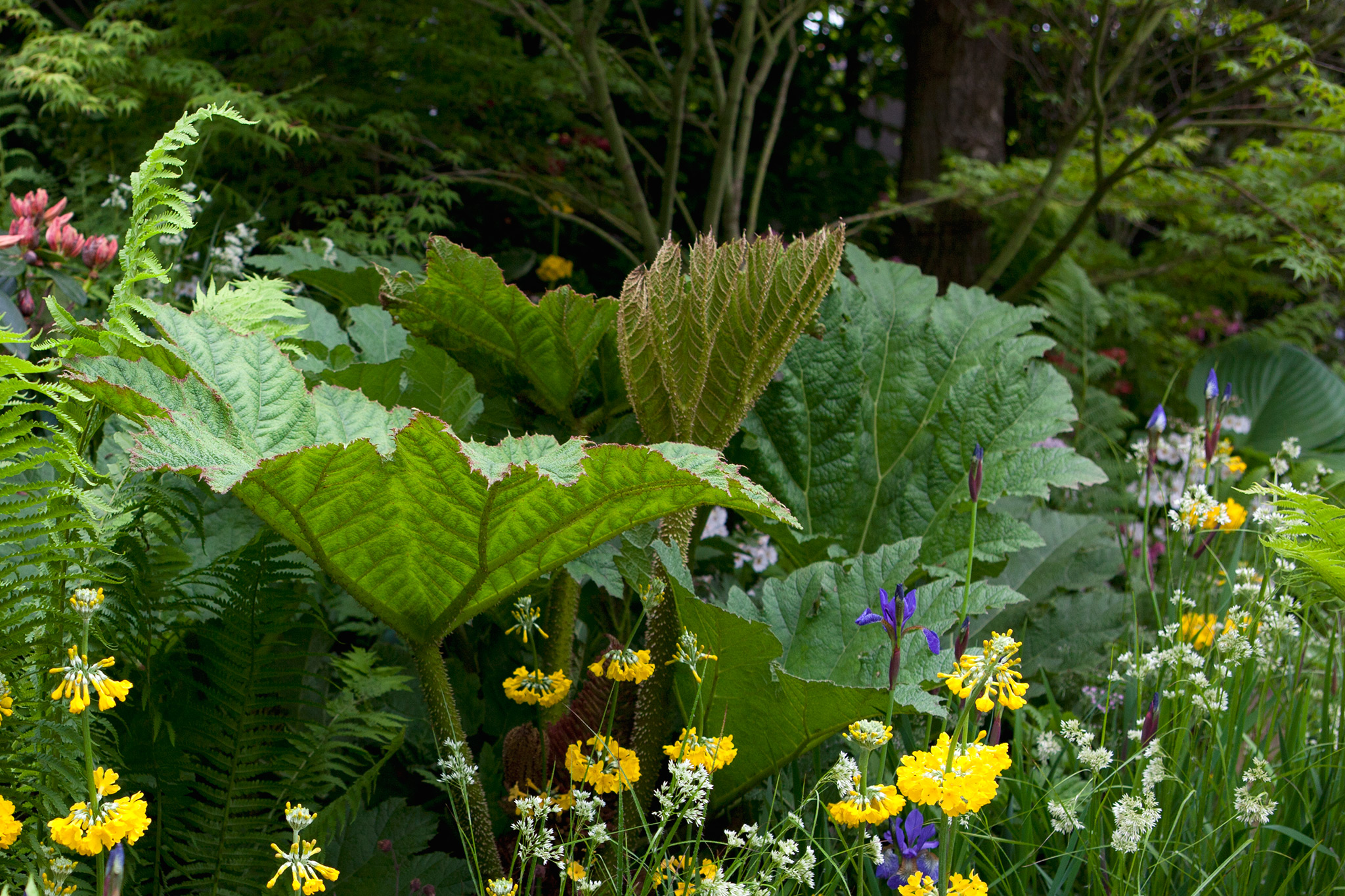 10 Plants to Grow in a Bog Garden