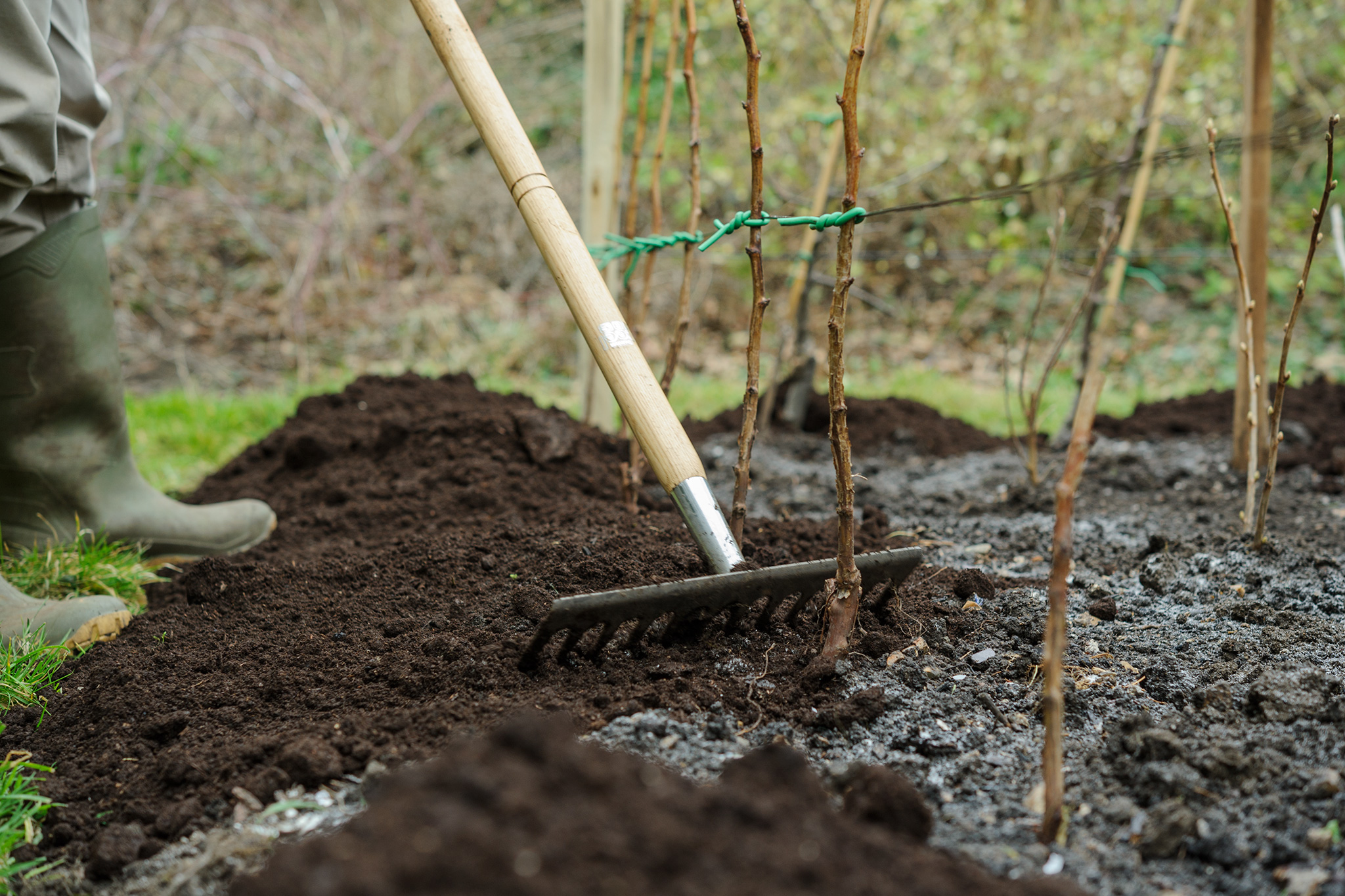 mulching-fruit-canes-3