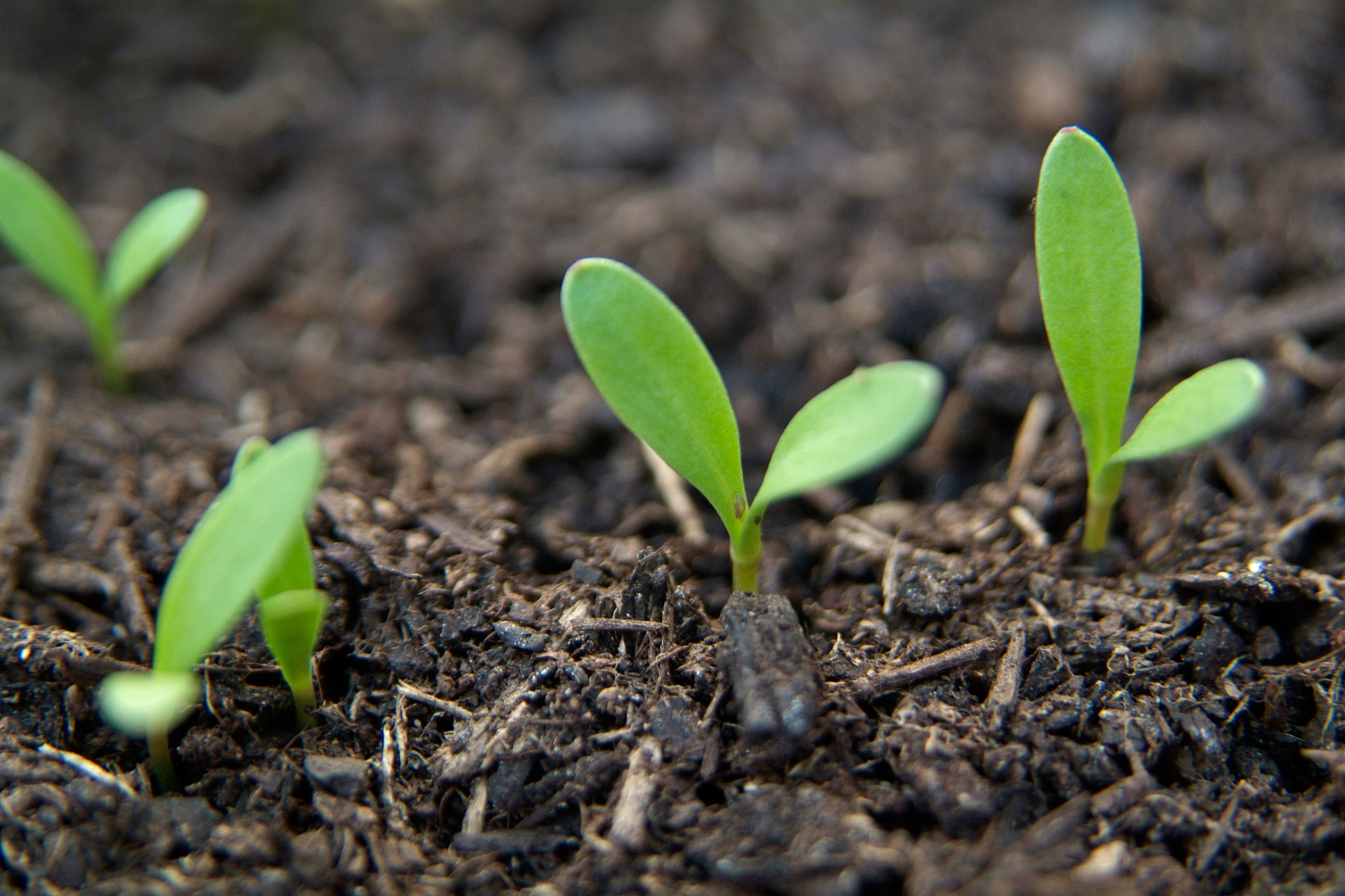 Guide to sowing seeds