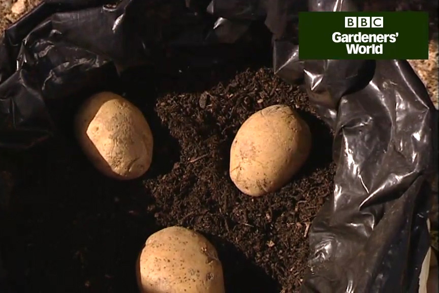 How to grow potatoes in a bag video