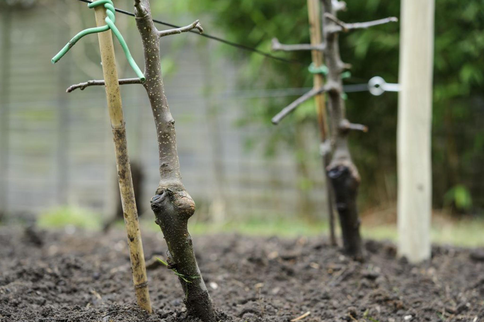 establishing-plants-2