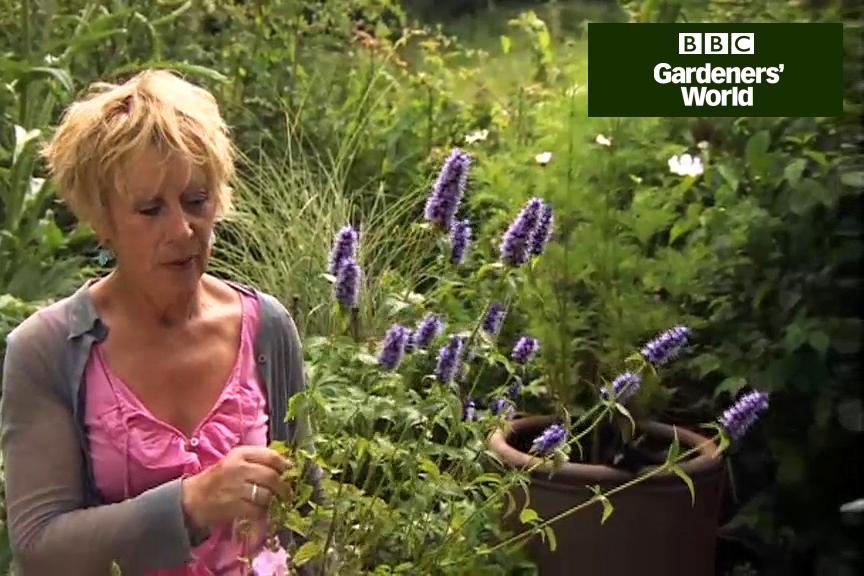 How to choose slug resistant plants part two