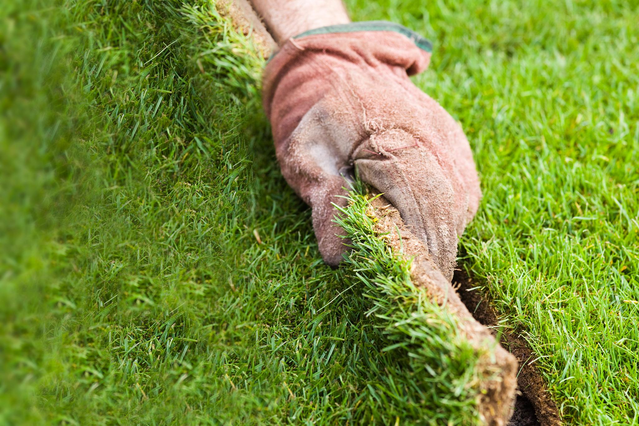 laying-turf-4