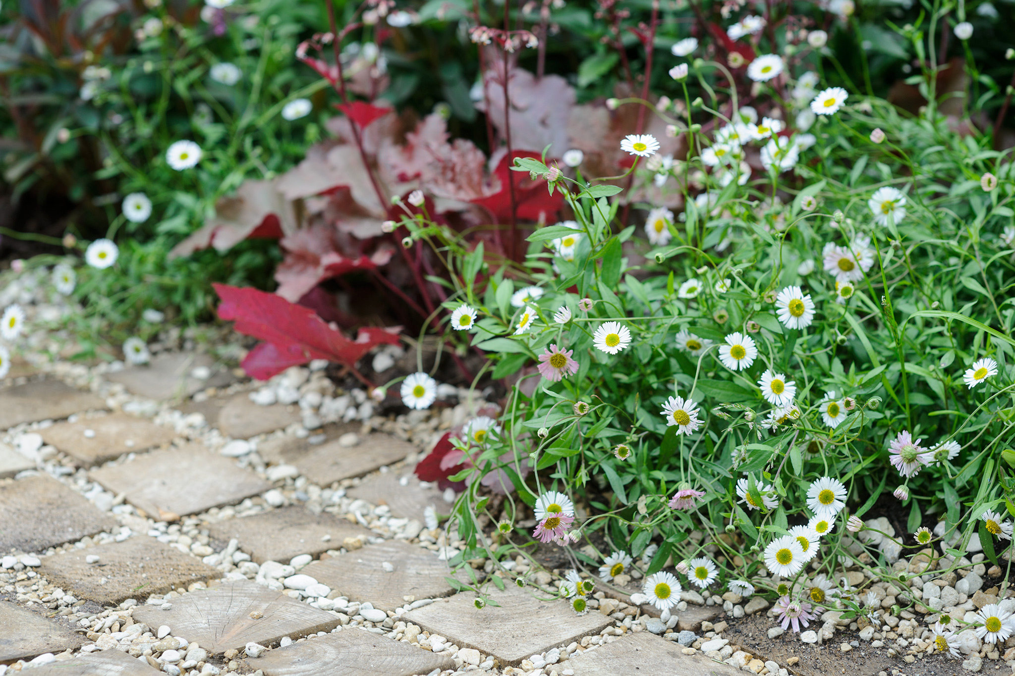 Plants for the Front of a Border