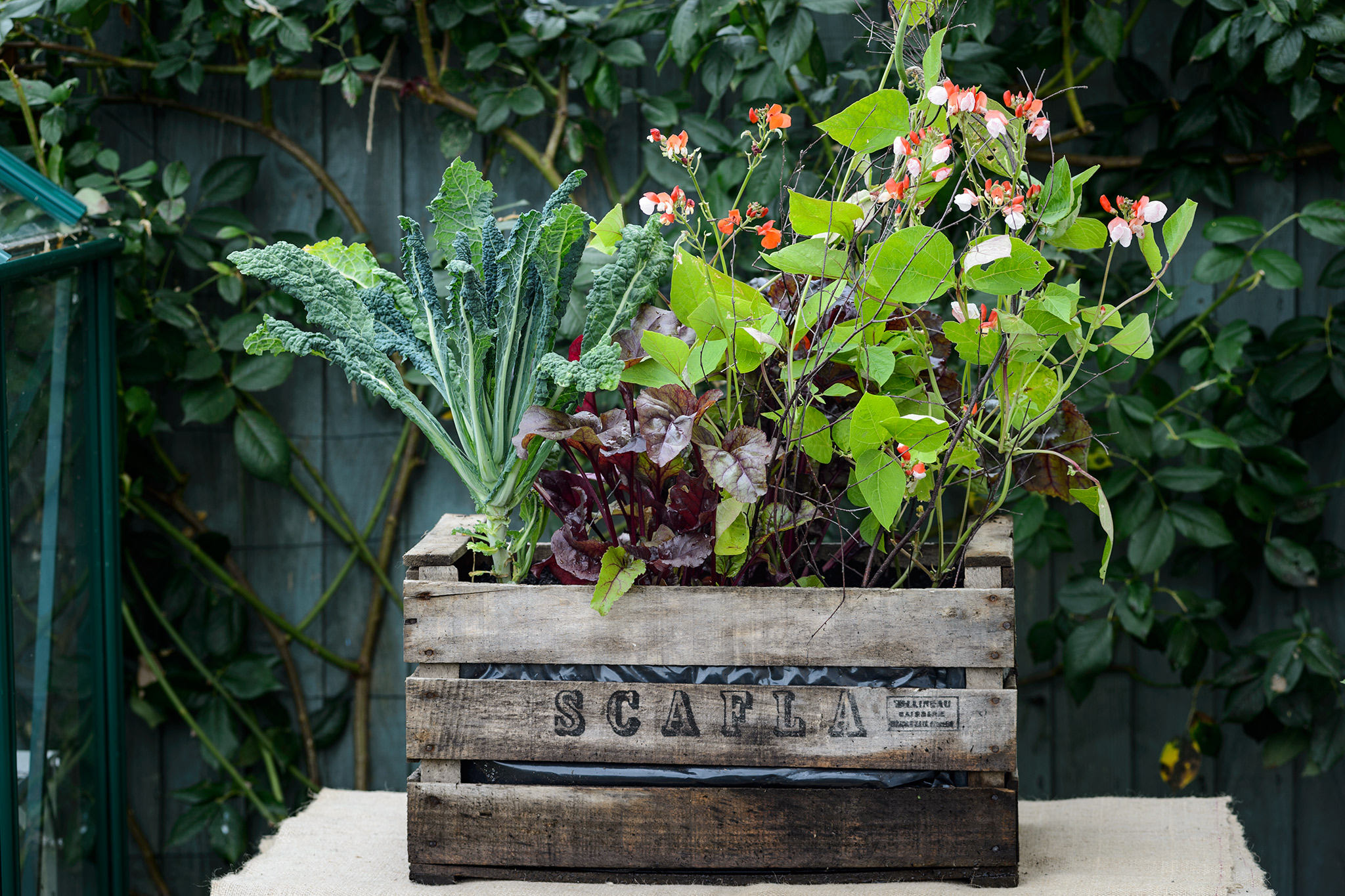 Wooden crate planted with vegetables