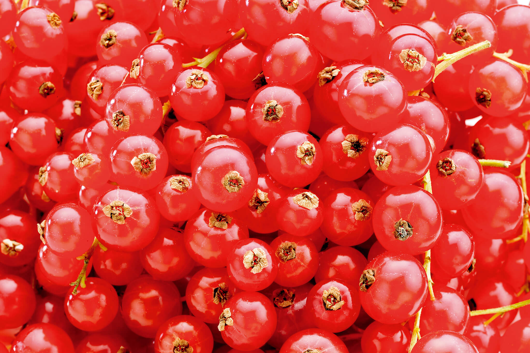 Heap of redcurrants (Ribes rubrum)