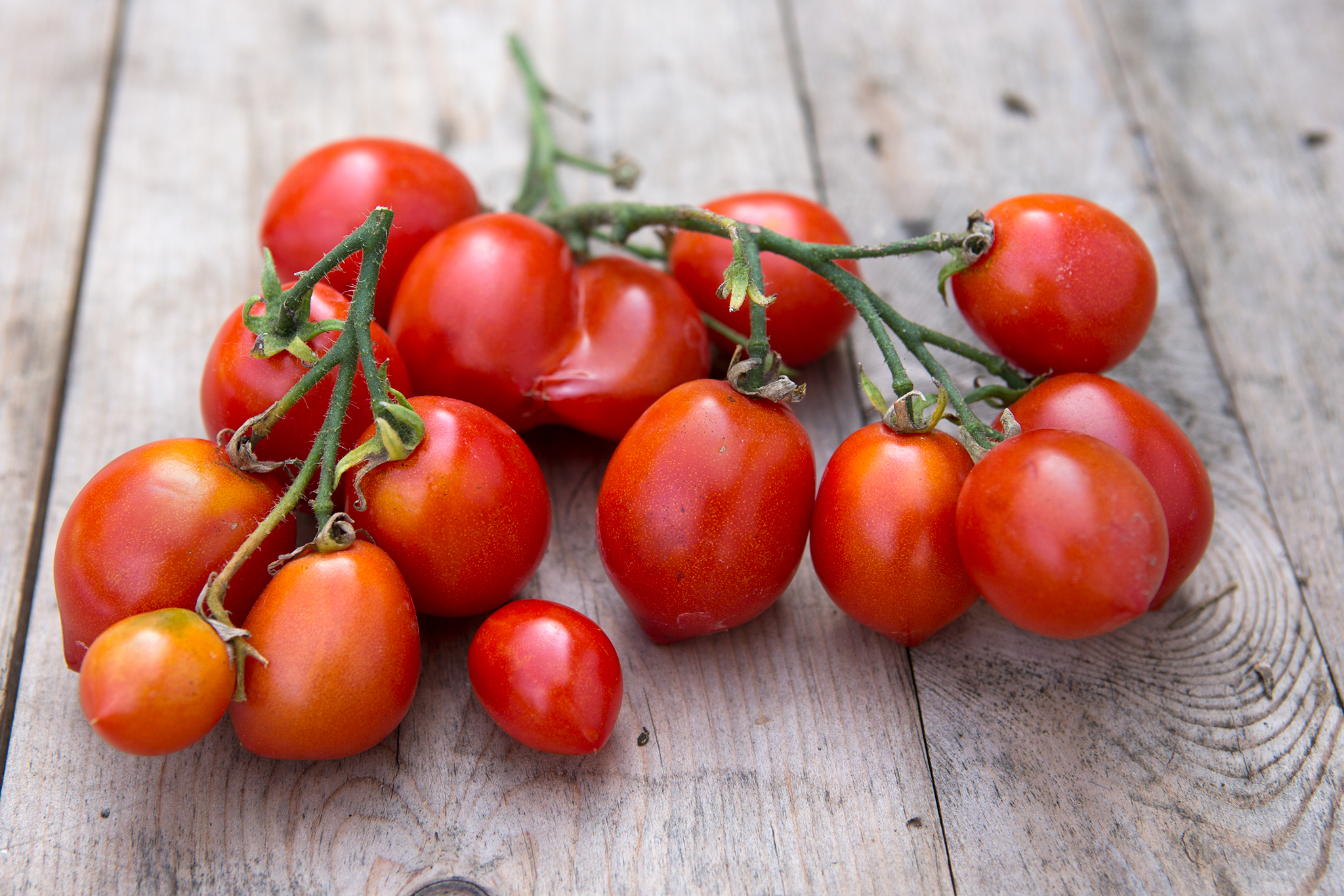 tomato-red-alert-2