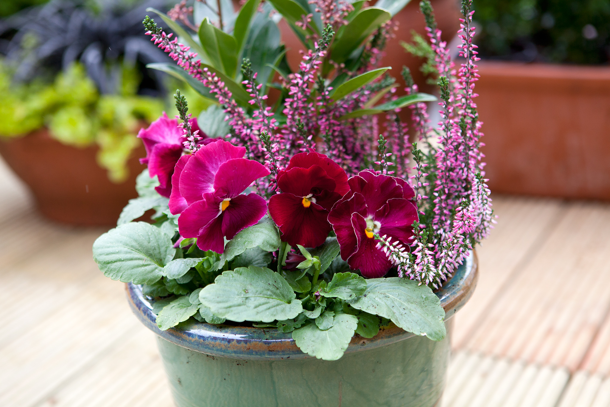 Six Pansy Container Ideas
