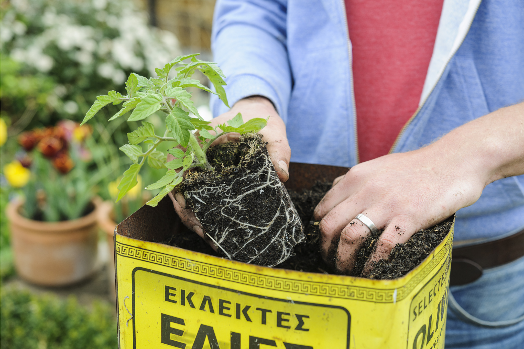 choose-a-large-container-to-grow-tomatoes-in-3