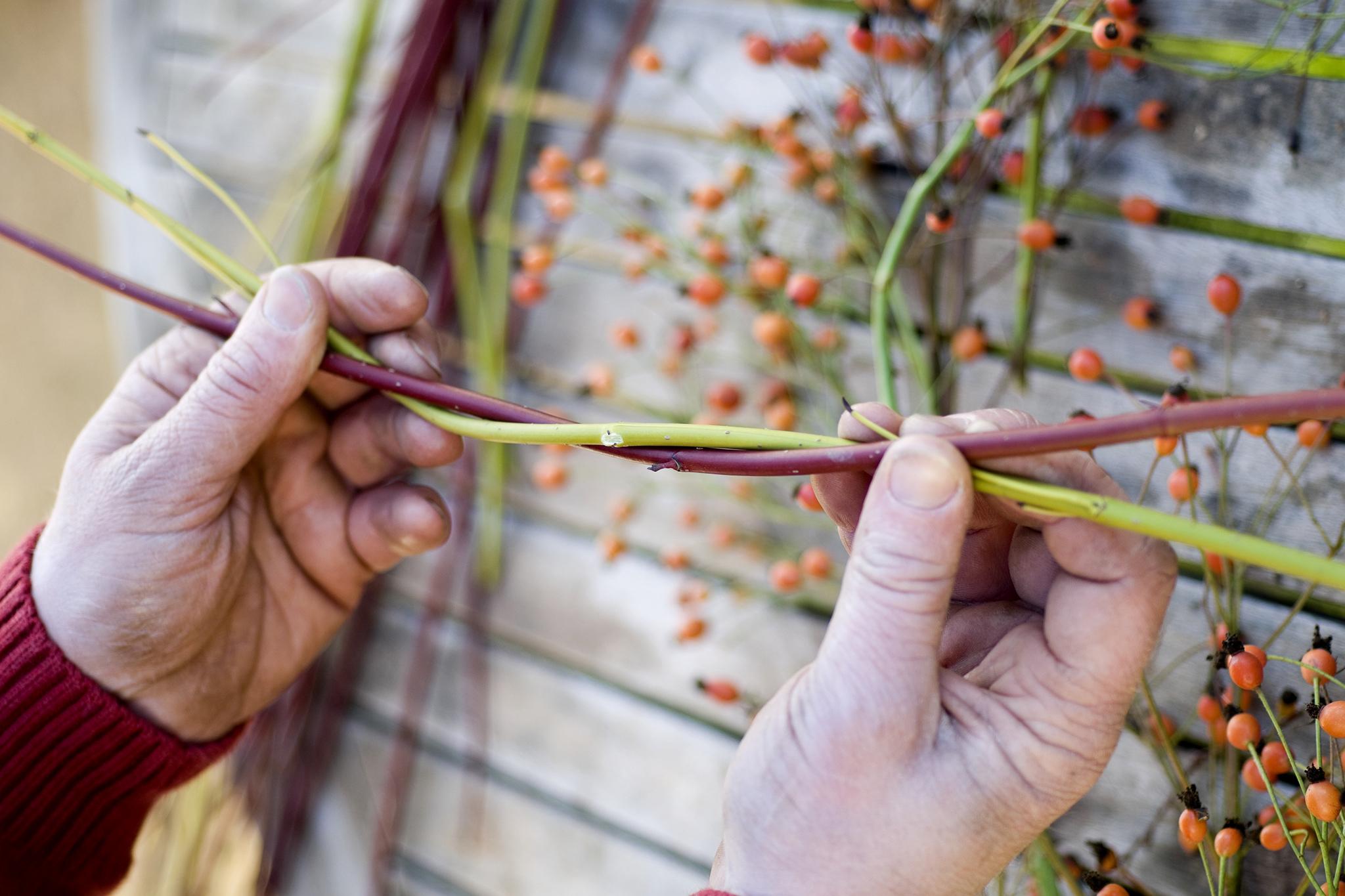 bending-dogwood-stems-together-3