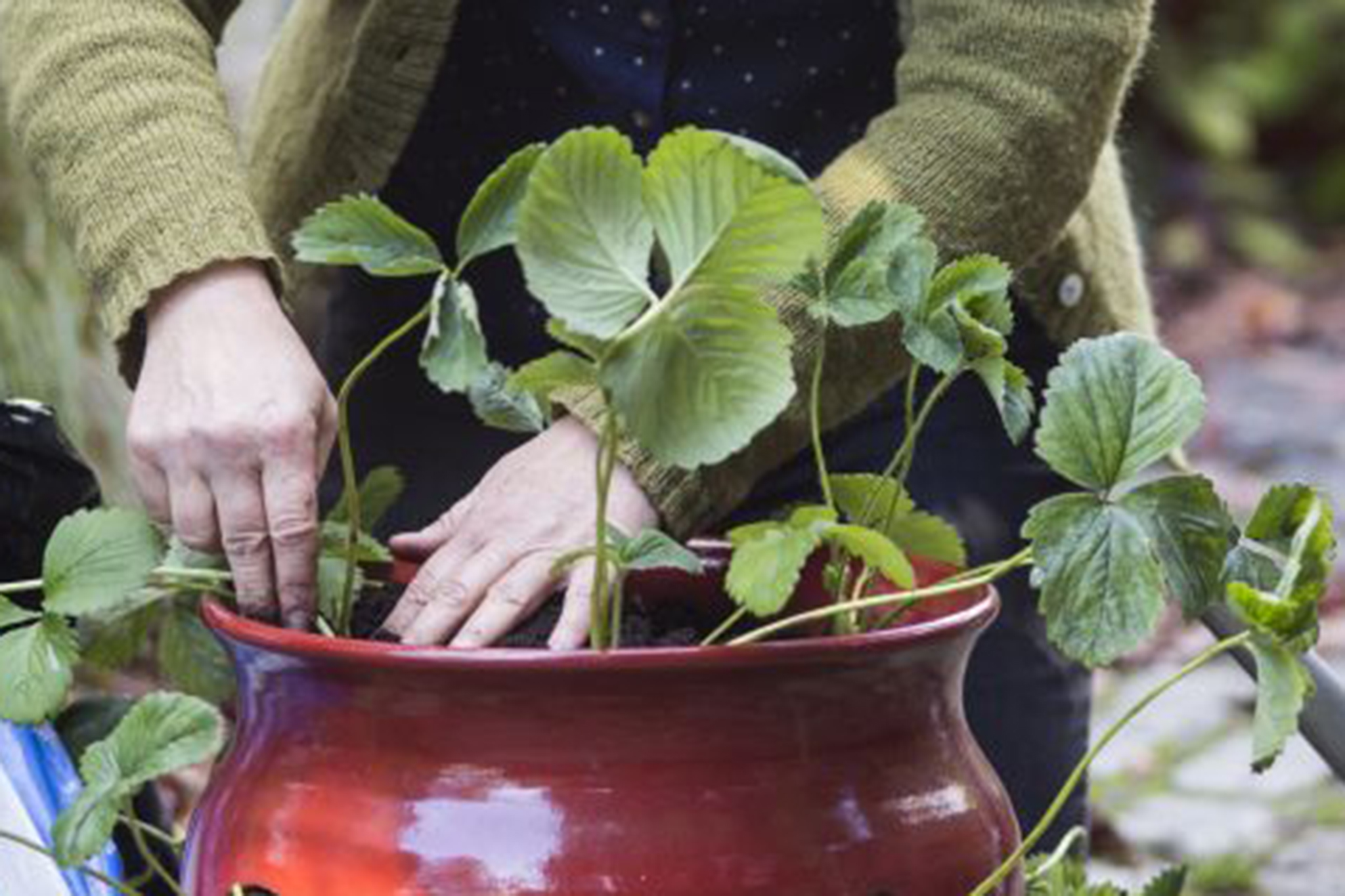 planting-up-the-pot-10