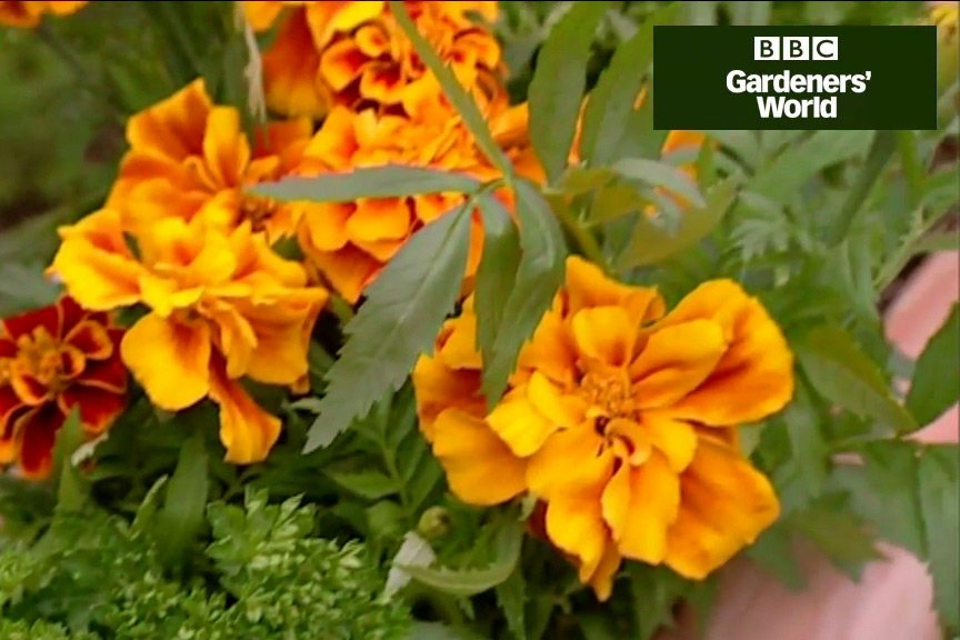 How to grow herbs in a window box video