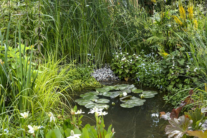 Is it OK to site a garden pond near established trees