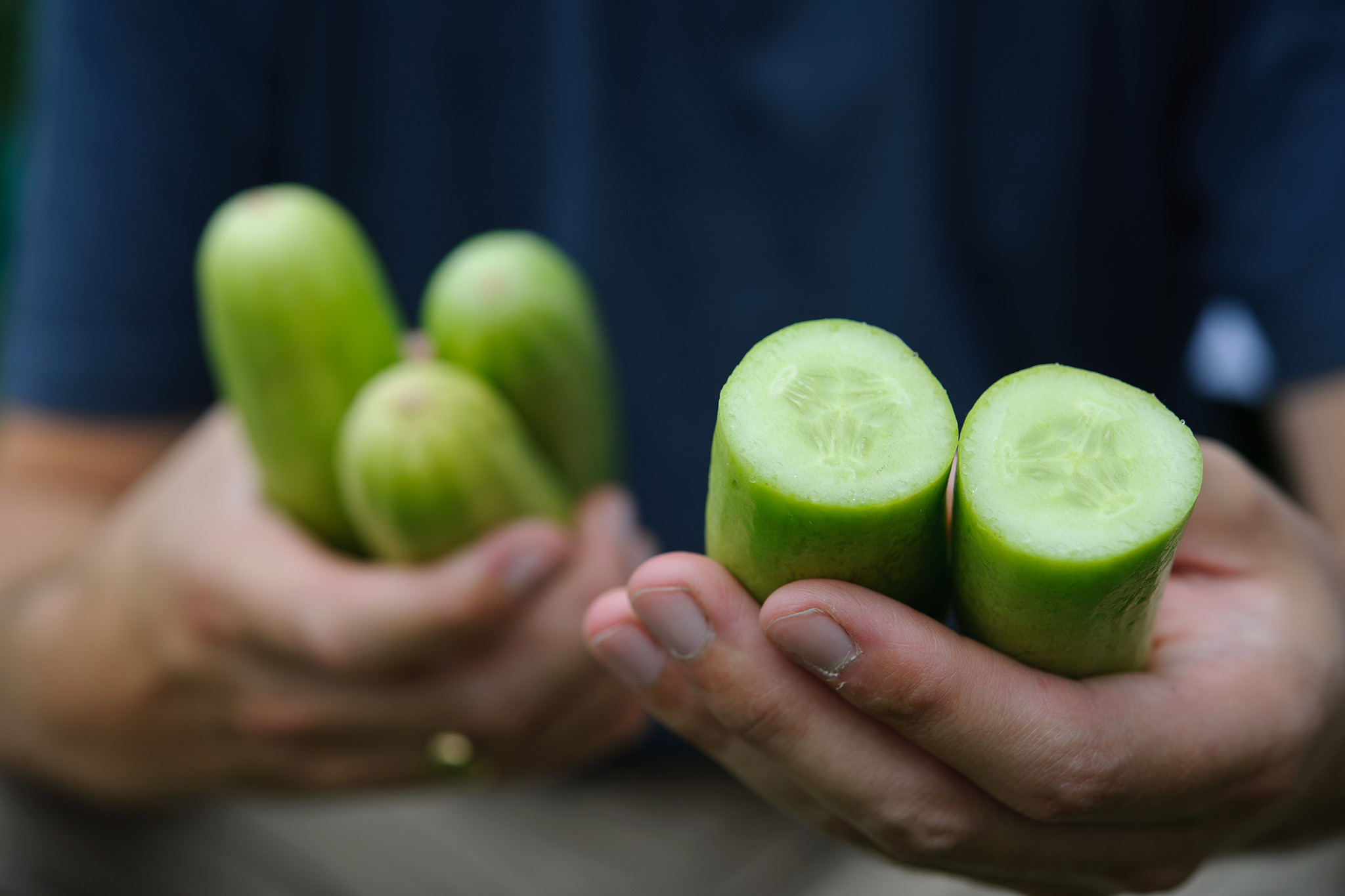 Cucumbers – Grow Guide