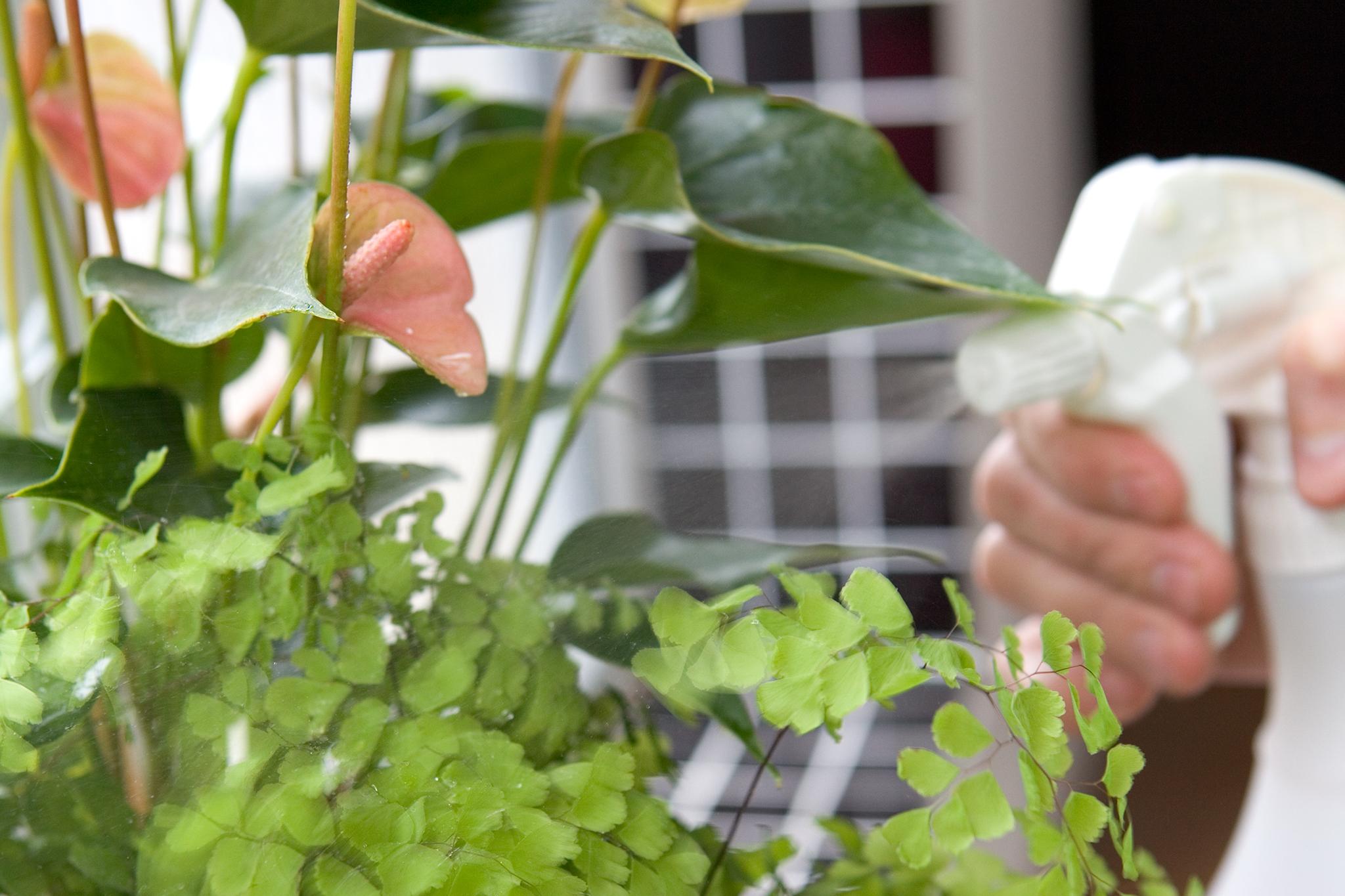 Комнатные цветы фото и название тенелюбивые уход