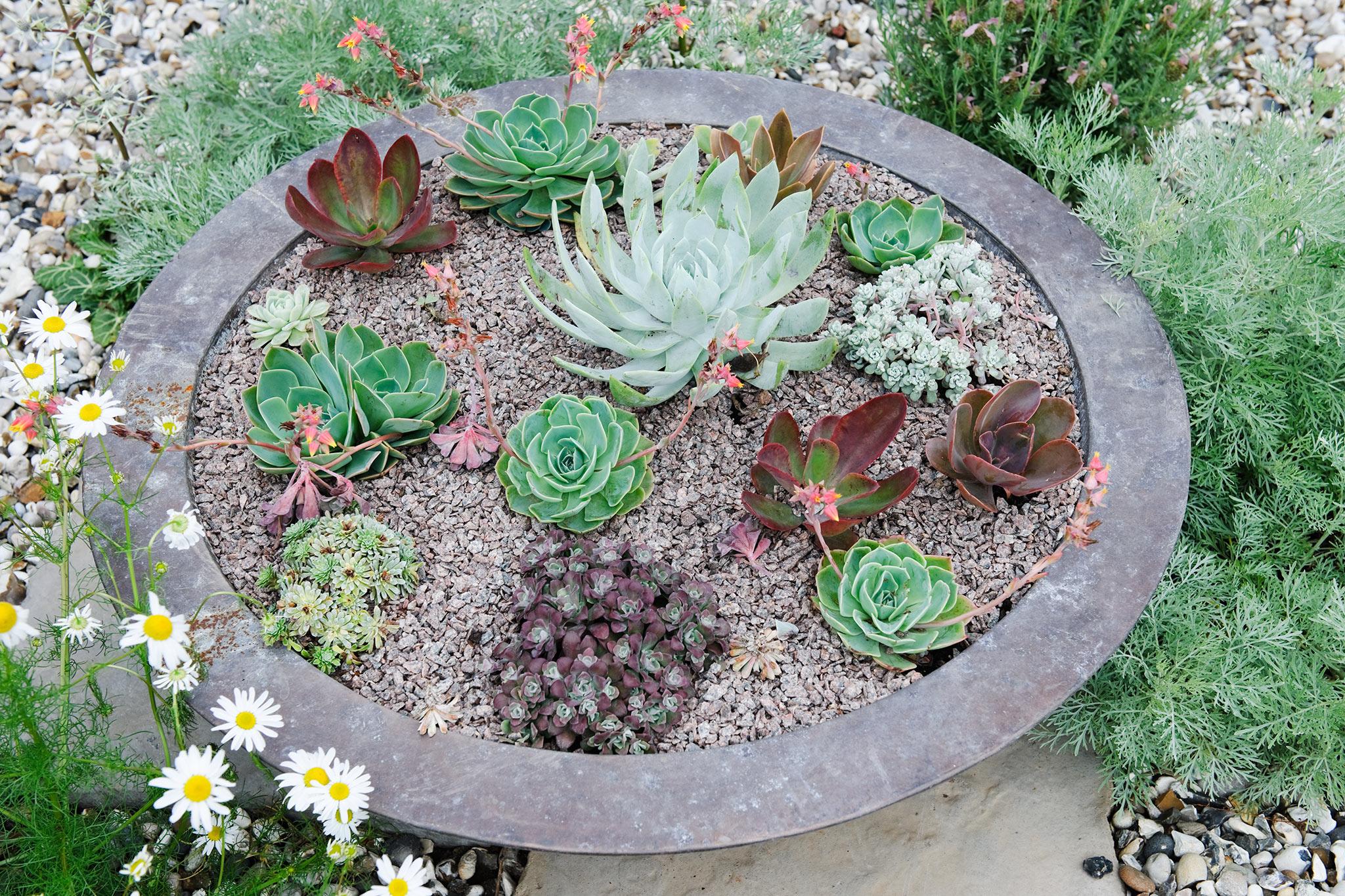succulent-pot-display-2
