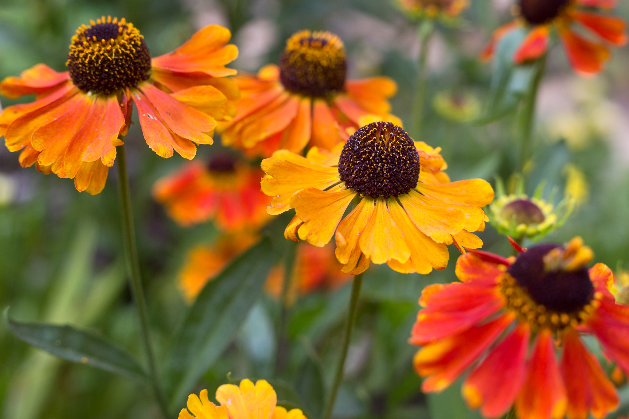 Five Summer Perennials For June Gardenersworld