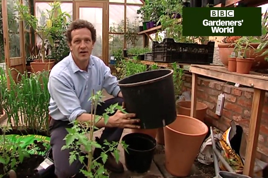 How to grow tomatoes in growing bags video