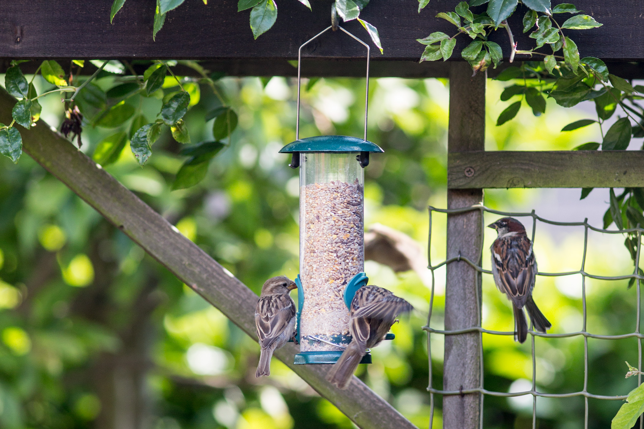 birds-at-a-feeder-2