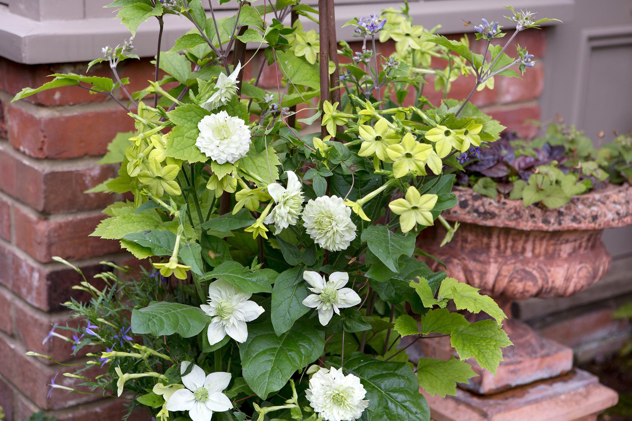 top-patio-plants-2