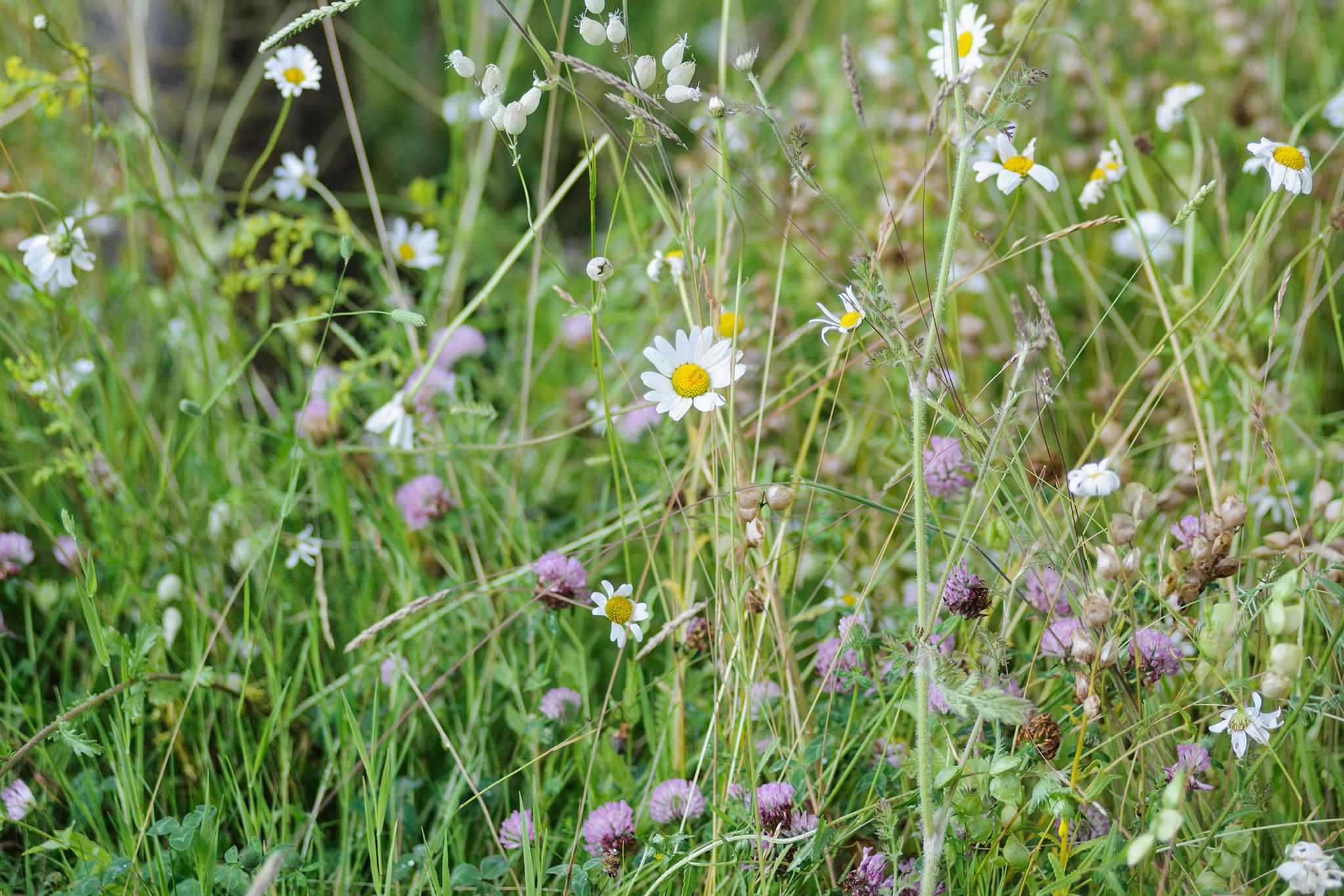 Lay Wildflower Turf