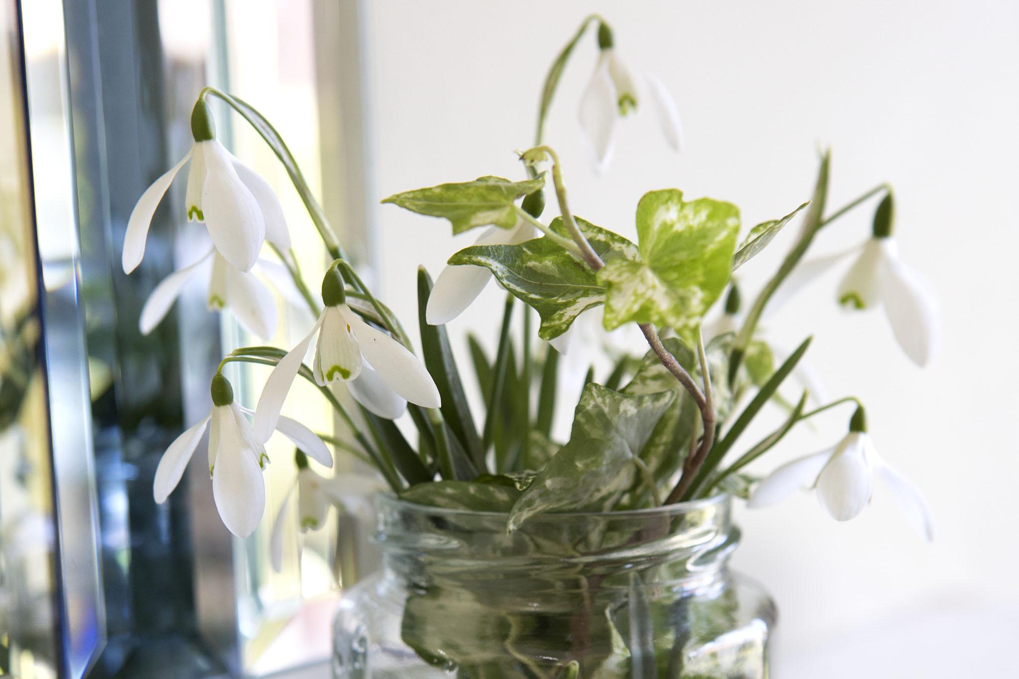 Snowdrop vase display