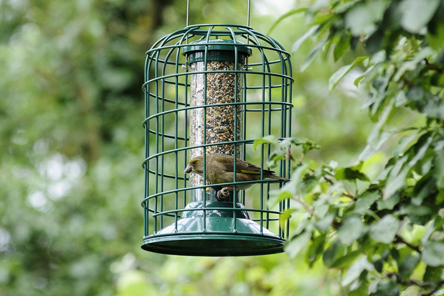 Can I stop bird seed germinating