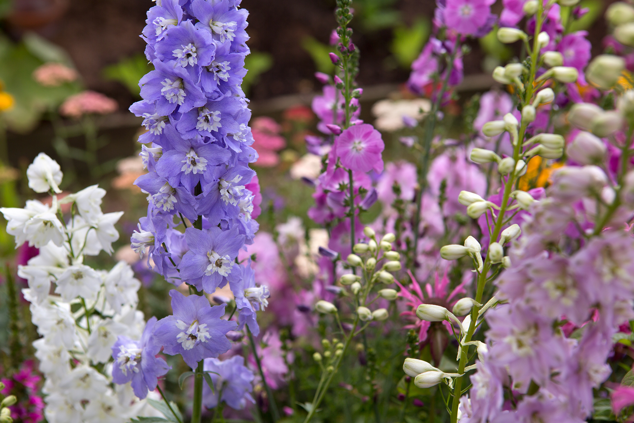10 Flowers to Pick in July - gardenersworld.com