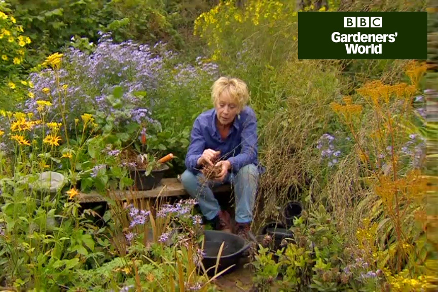 How to divide perennials in autumn video