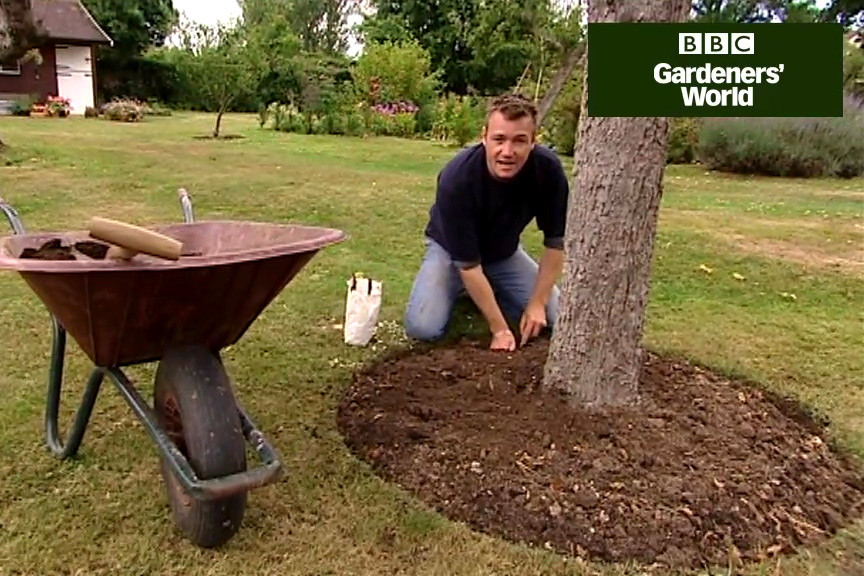 How to plant colchicums video
