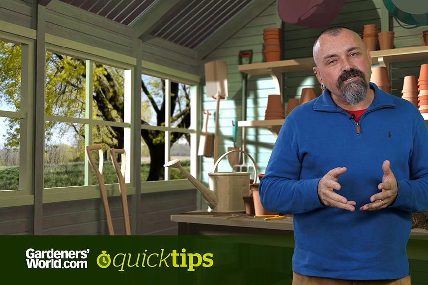 How do I reduce a pampas grass? video