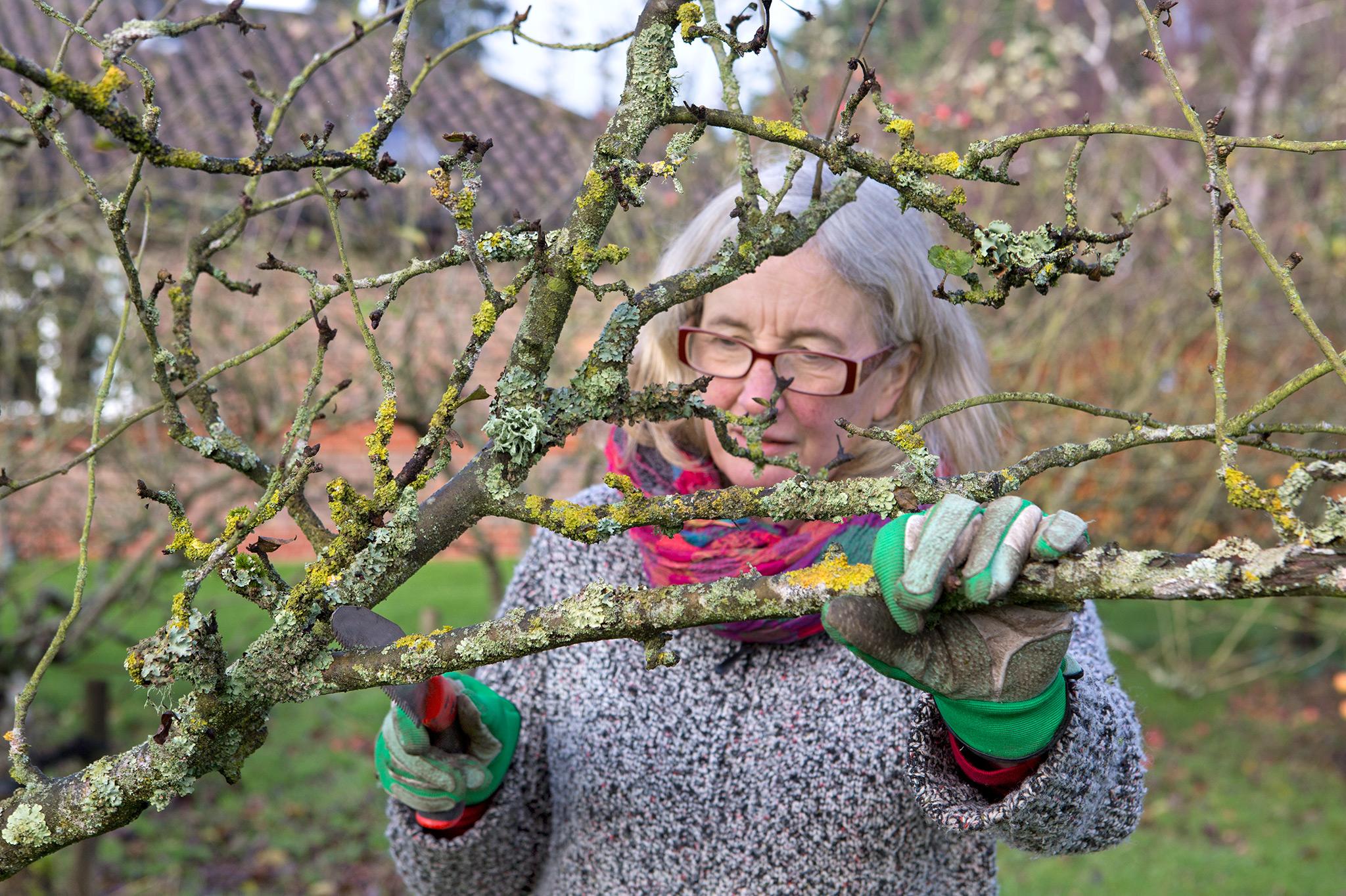 pruning-an-apple-tree-in-winter-3