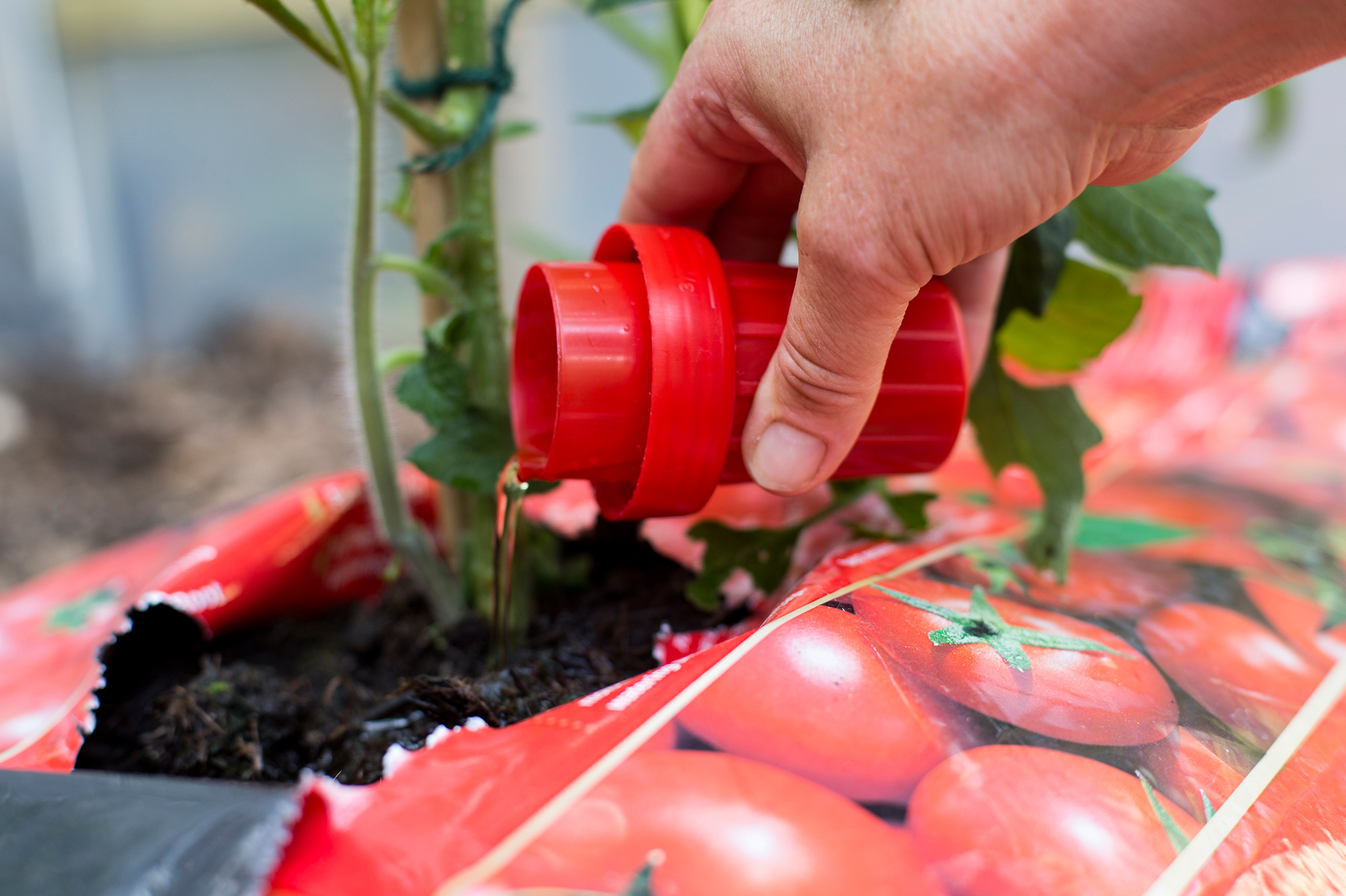 Feeding tomatoes in a growing bag