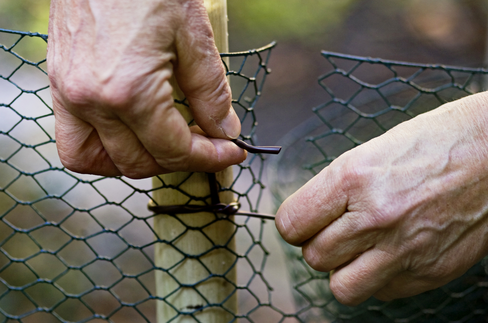 securing-an-overlap-of-chicken-wire-with-wire-to-form-the-containing-wall-2