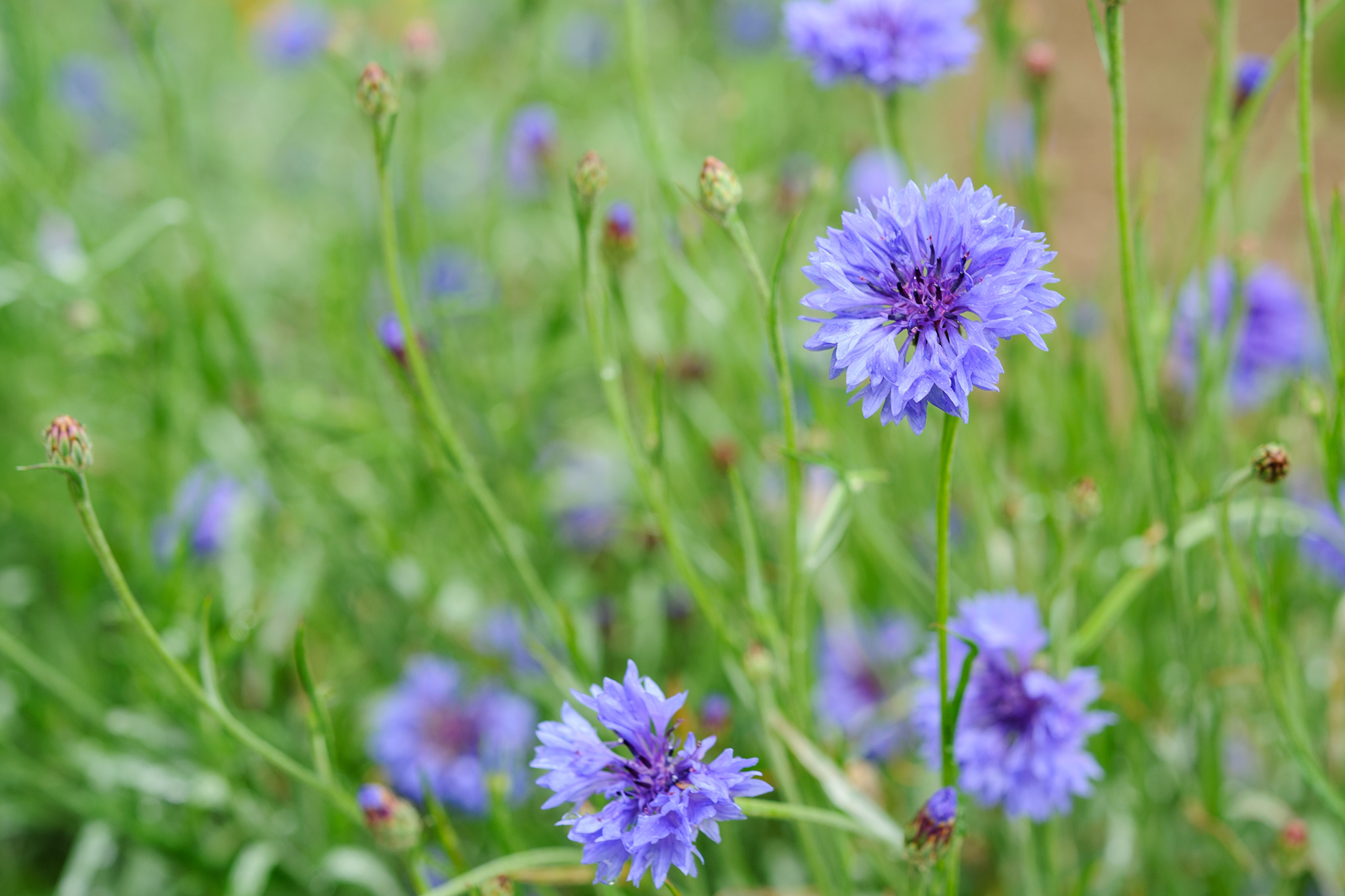 Plants to sow in september-8608