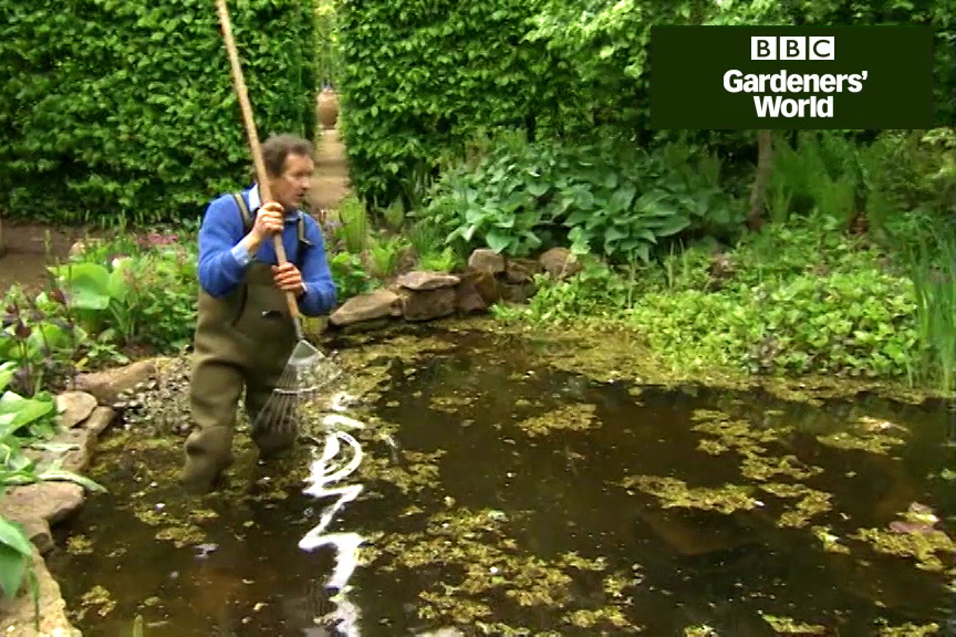 How to divide water mint in a garden pond video