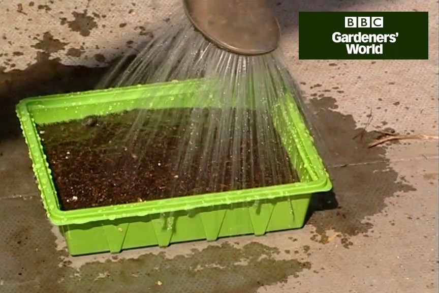 How to grow vegetables from seed video