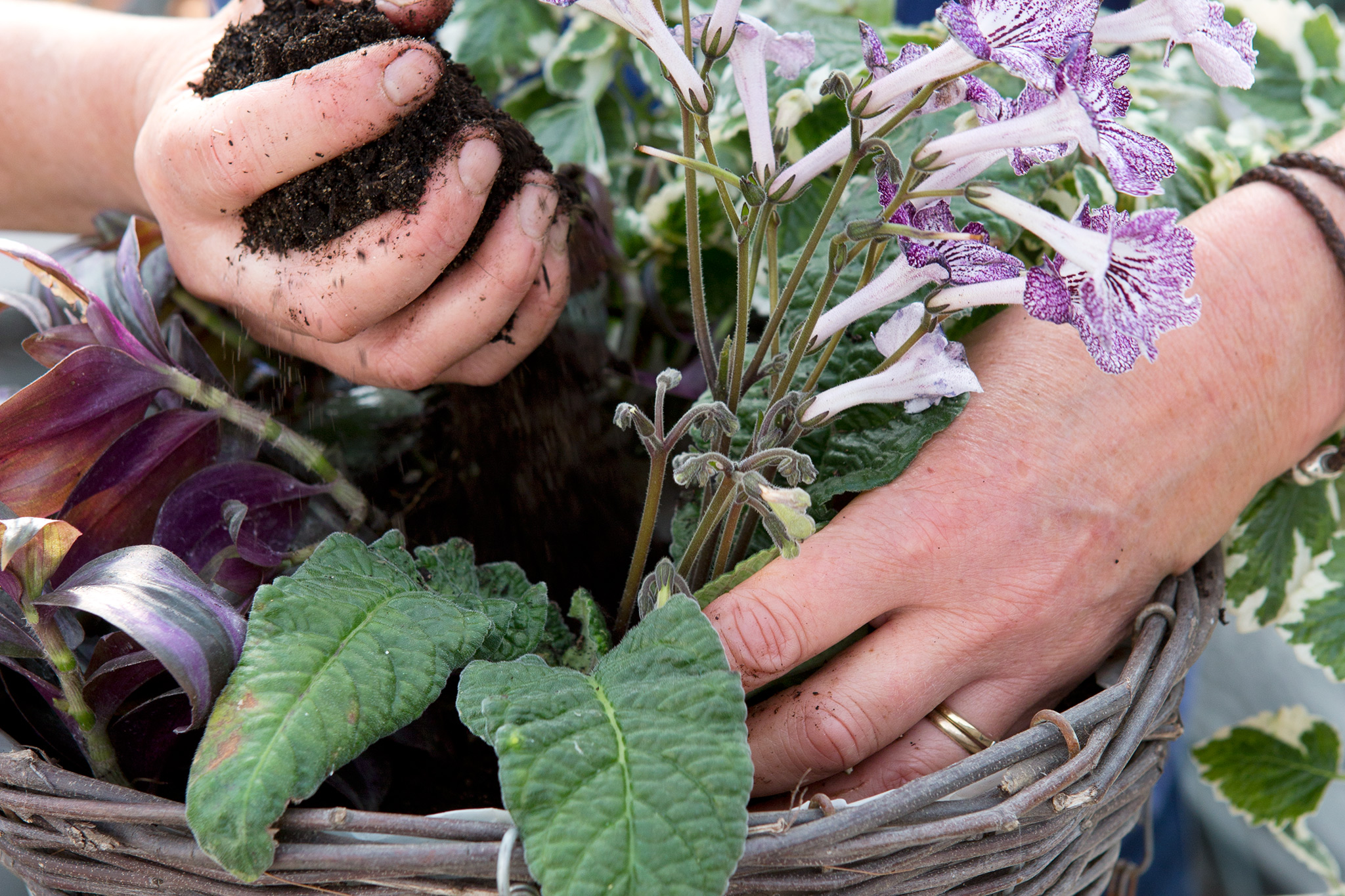 arranging-the-plants-in-the-basket-2
