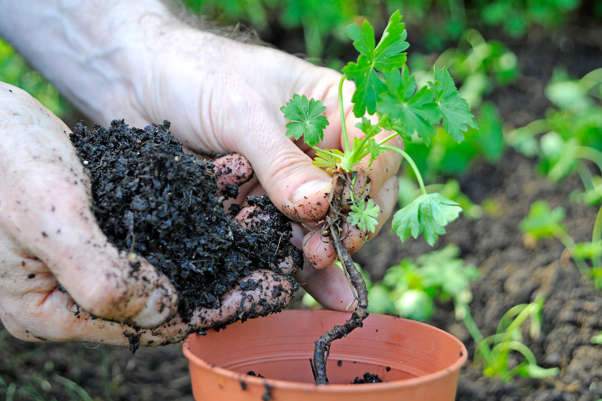 potting-up-seedlings-2