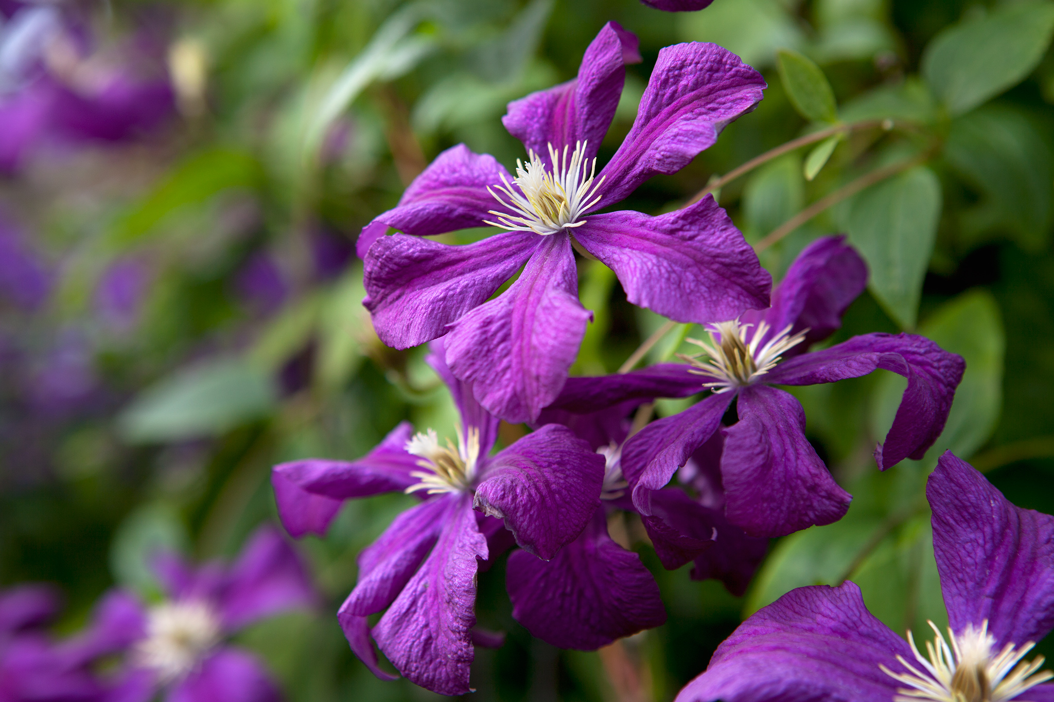 Plants with purple flowers