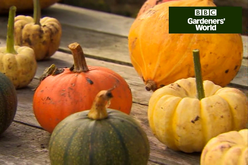 How to harvest pumpkins video