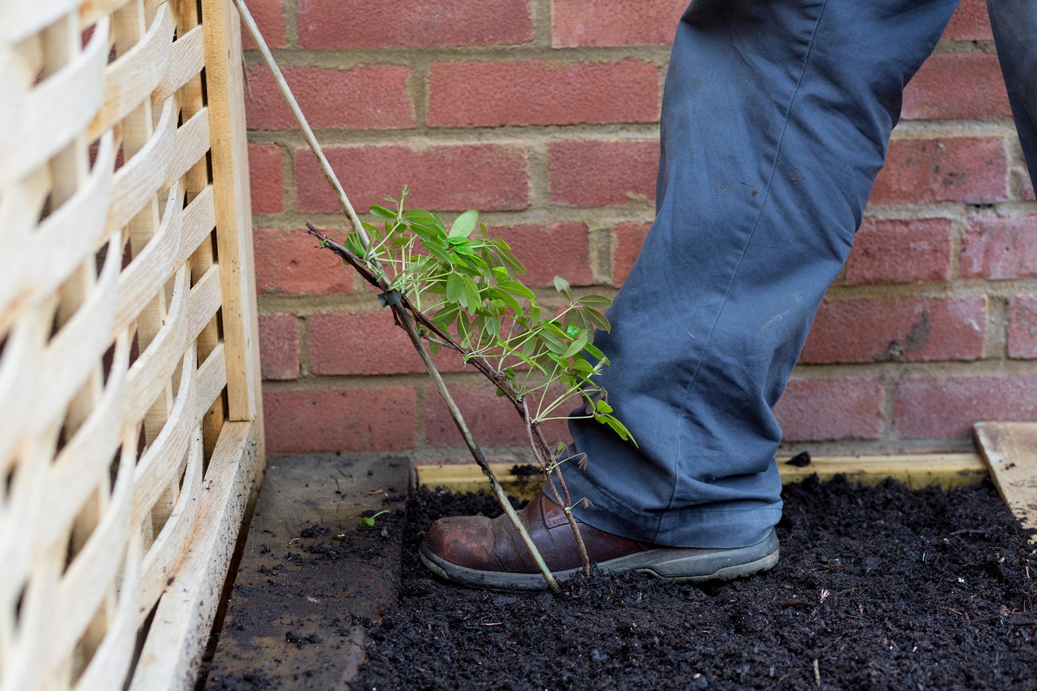 planting-a-climber-2