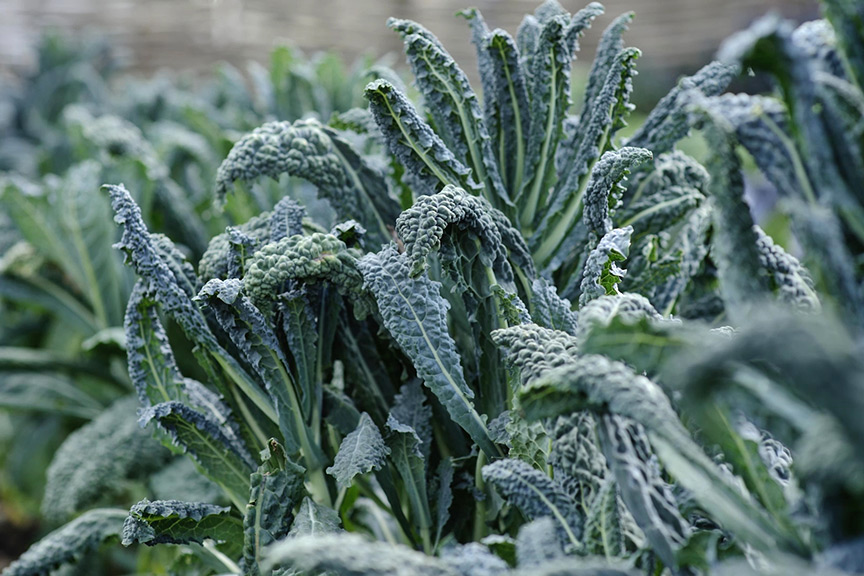 Can I rid my veg plot of clubroot