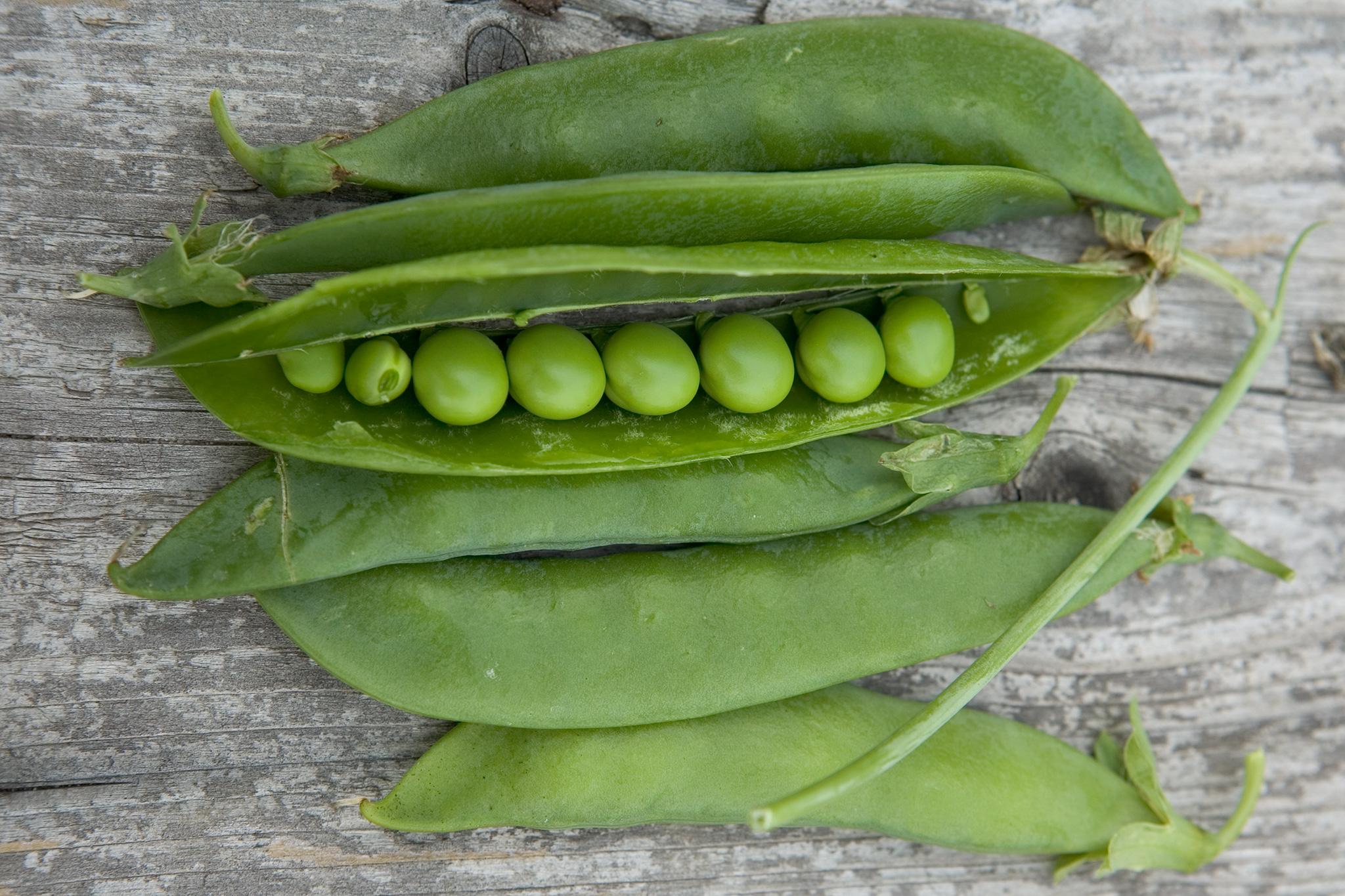 peas-in-a-pod-8