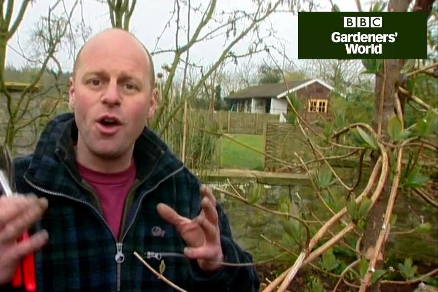 How to prune honeysuckle video