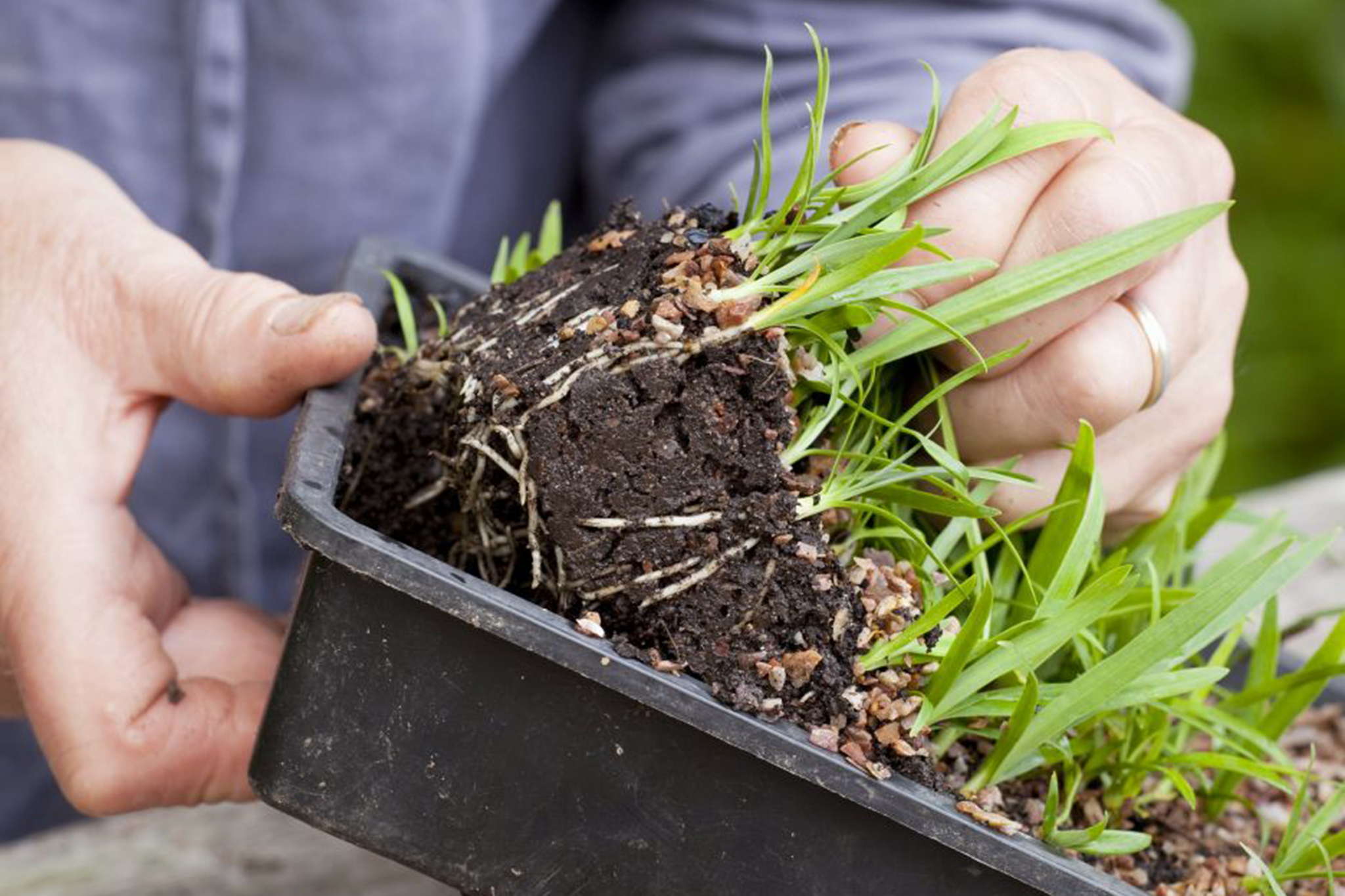 removing-seedlings-from-the-compost-tray-3