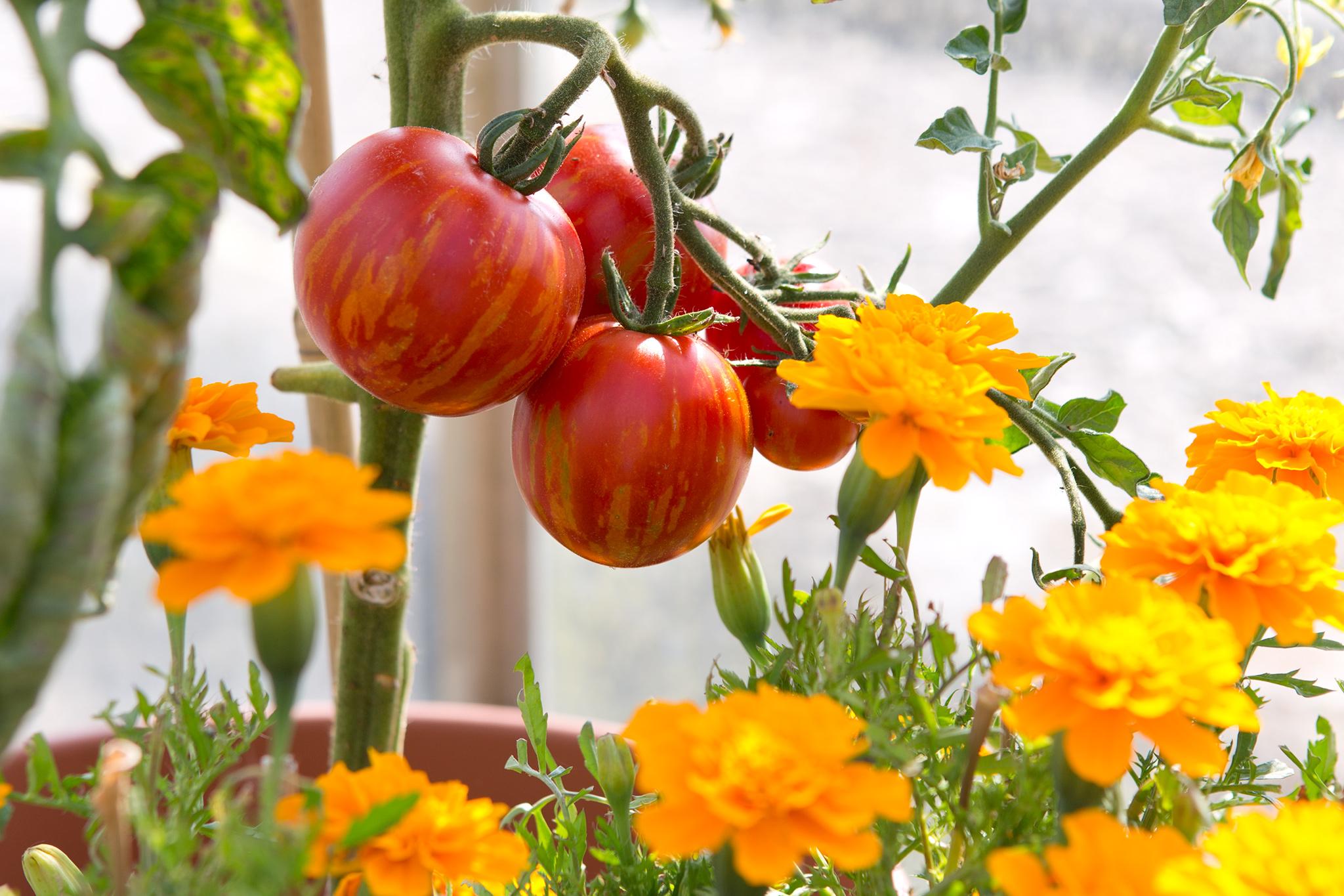Companion planting combinations