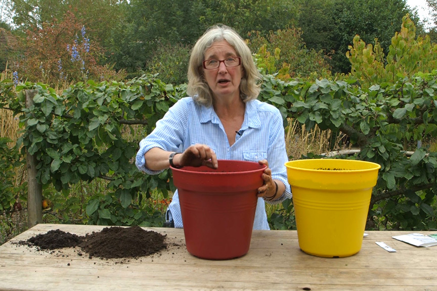 Sowing salad in pots video